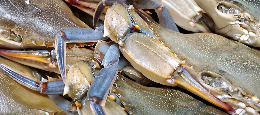 Get your fresh soft shells 🦀 @ Hank's Market